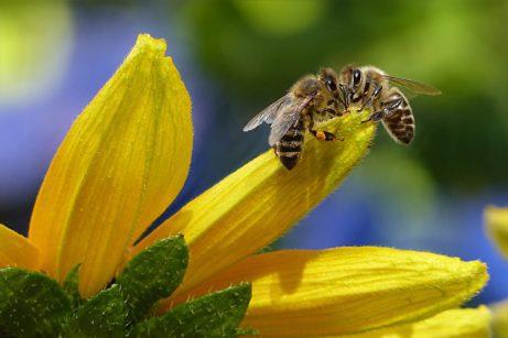 včely avčelí vosk